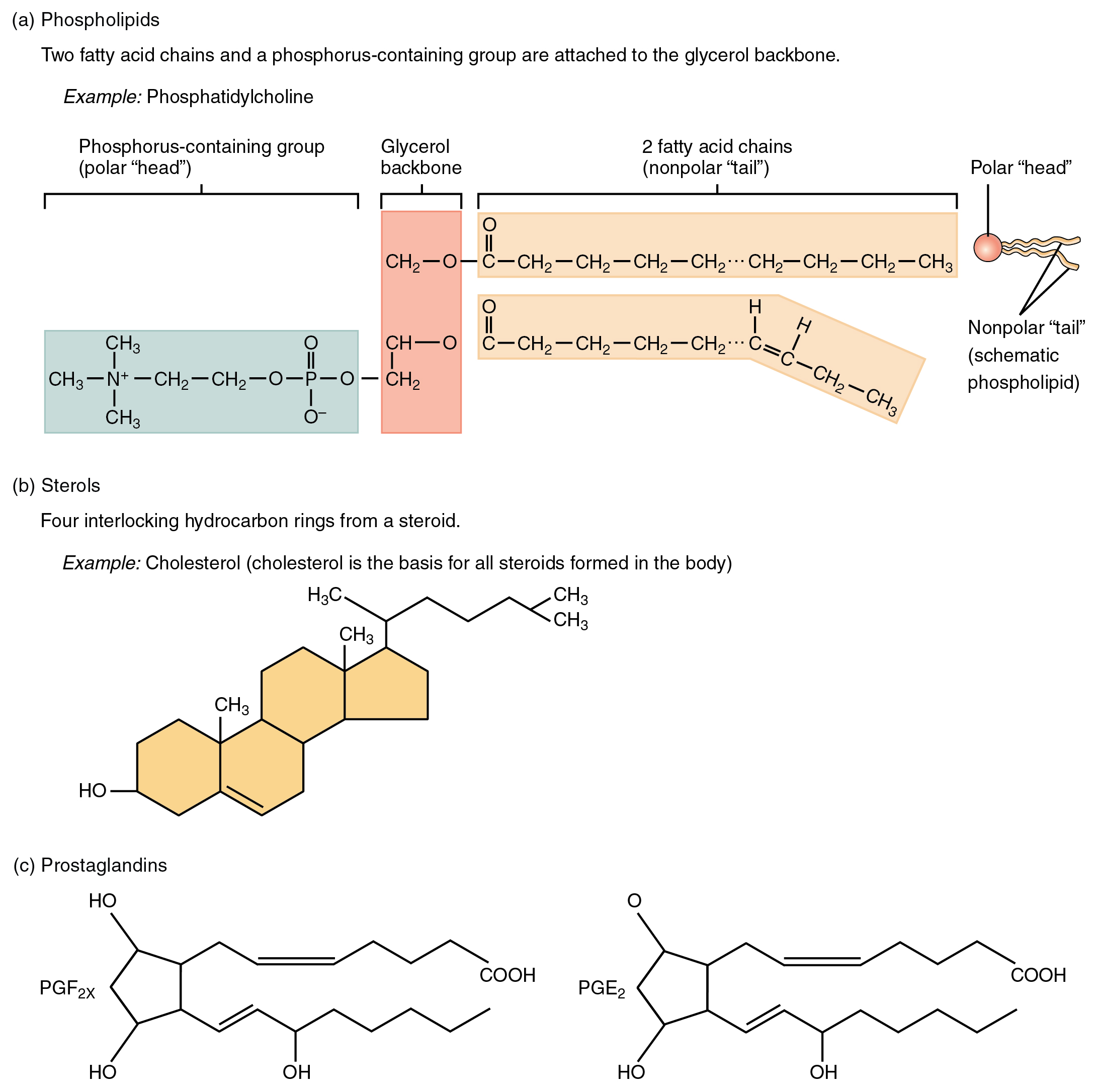 Derived copy of organic compounds essential to human functioning steroids pooptronica