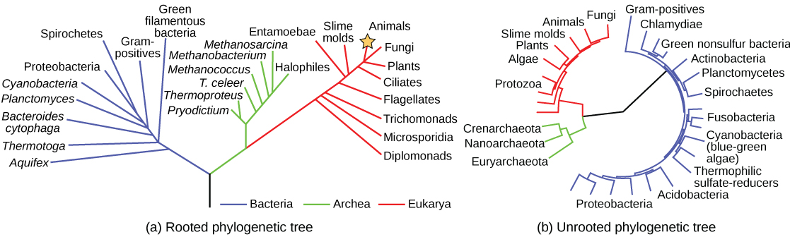 Systematics And The Tree Of Life