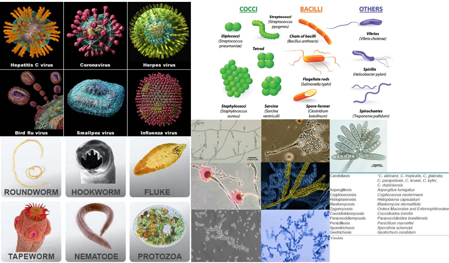 different types of germs top left viruses bottom left parasites top right bacteria and bottom right fungi