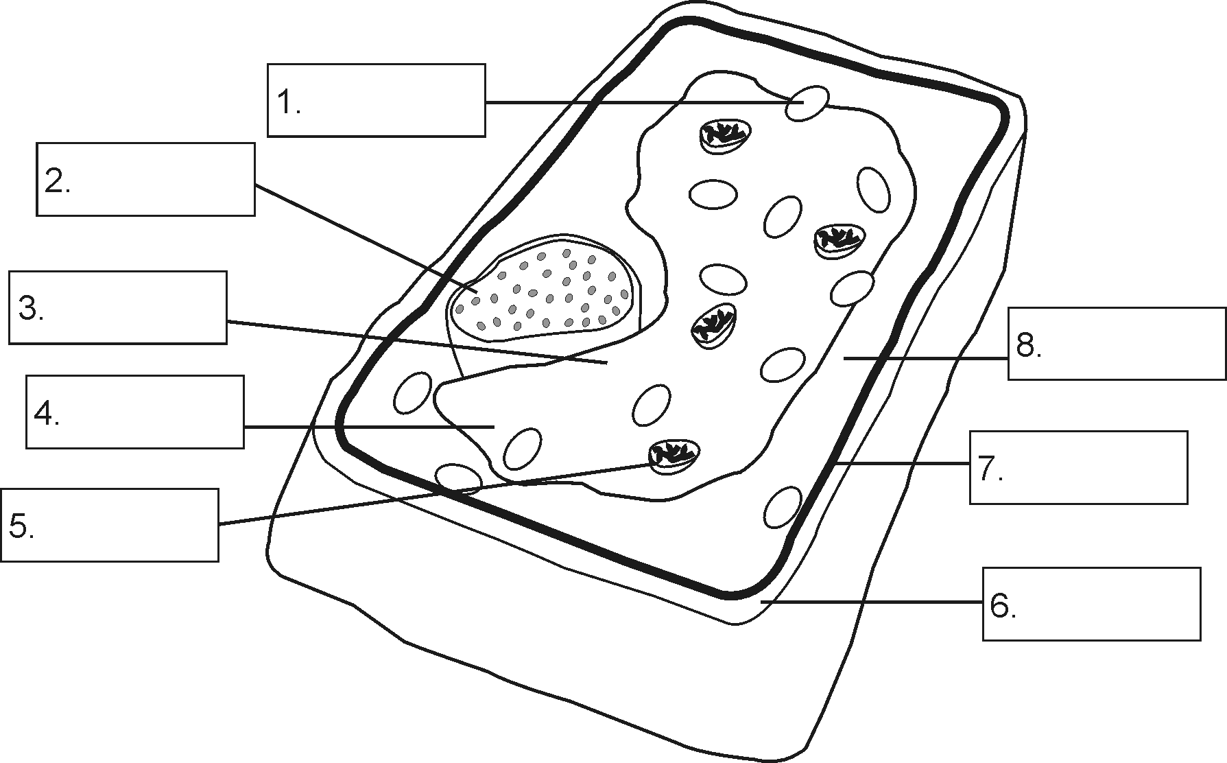 Structure of a plant cell ccuart