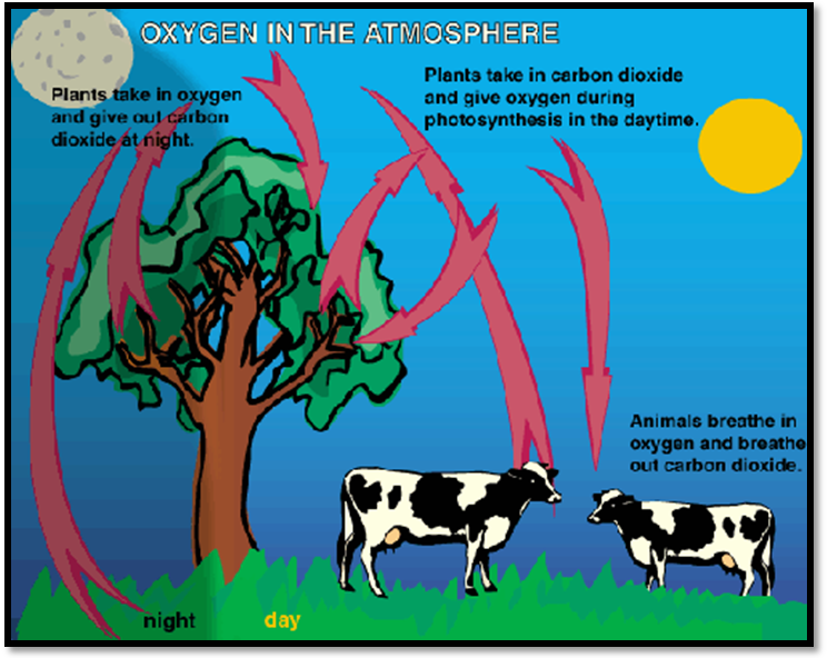 Rice air curriculum lesson 3 teacher atmospheric gases and credit httpkidsgeogeography for kids0160 the oxygen cyclep ccuart Choice Image