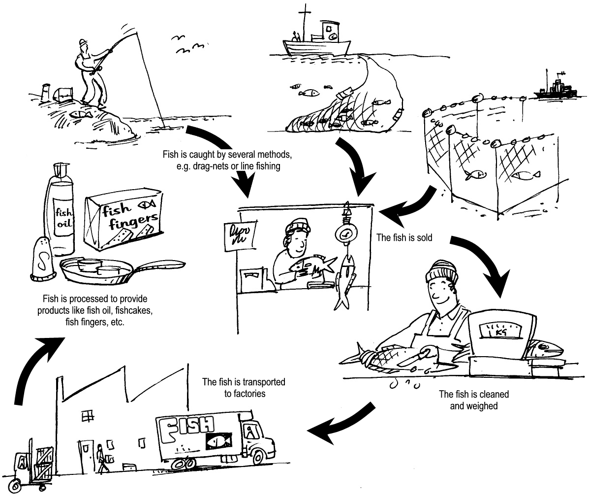 The fishing industry study the following sketches and complete the diagram pooptronica