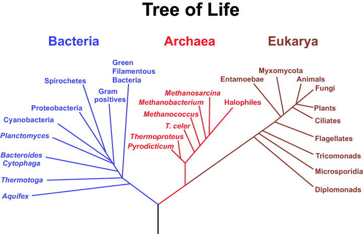 Cladograms Of Animals